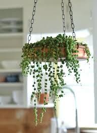 Indoor Container Gardening - indoor flower planters u2013 affordinsurrates com