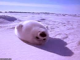 Baby Seal Meme - baby seal señor gif funny gifs gif memes
