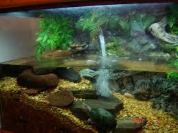 48 best fish tank ideas images on fish tanks aquarium