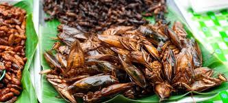 insectes dans la cuisine les insectes débarquent dans votre assiette prêt e à essayer