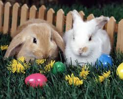 35 best rabbits images on pinterest funny bunnies animals and