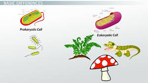 the central dogma of biology definition u0026 theory video u0026 lesson