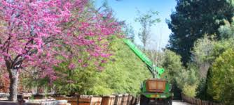 berylwood tree farm wholesale nursery for large trees in southern