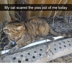 Scared Cat Meme - my cat scared the piss out of me today meme on me me