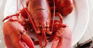 comment cuisiner un homard cuisson du homard comment cuire et préparer un homard