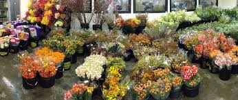 Flower Shops In Augusta Maine - cut flower wholesale welcome to the wow warehouse