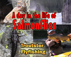 stoneflies and caddis archives troutster com fly fishing and