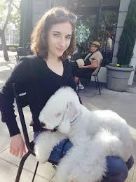 bedlington terrier guard dog the 12 best lap dog breeds u2013 iheartdogs com