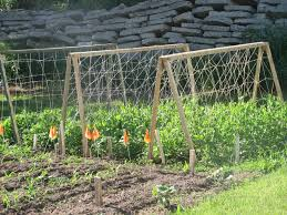 developing cucumber trellis ideas for your own field