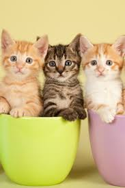 123 best we cats images on pinterest animals cats and kitty