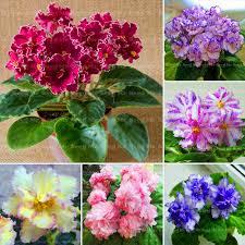 Indoor Herbal Garden Online Get Cheap Indoor Herbal Garden Aliexpress Com Alibaba Group