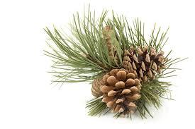 rustic christmas 5 ideas to create rustic christmas ornaments ebay