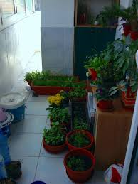 enclosed balcony turned zen garden