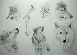 46 best drawing sketching animals images on pinterest drawings