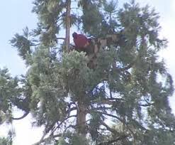 seattle in tree may be crisis say cops