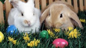 bunny easter the origin of the easter bunny and coloring easter eggs today in