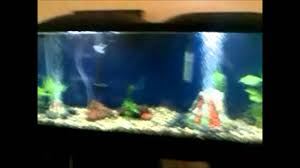 55 gallon aquarium light 55 gallon marineland led fish tank youtube