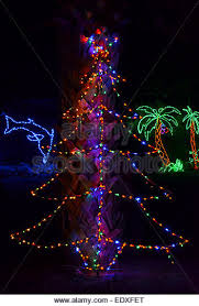 Decorate Palm Trees With Christmas Lights palm tree christmas lights stock photos u0026 palm tree christmas