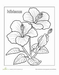 coloring pictures of hibiscus flowers hibiscus worksheet education com