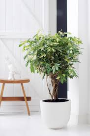 large houseplants you pinned it we id it a stylish collection of houseplants