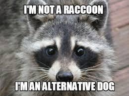 Raccoon Meme - meme maker raccoon generator