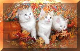 thanksgiving kittens ramblings of an asparagus