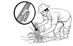 Methods Of Controlling Plant Diseases - managing pests and plant diseases hesperian health guides