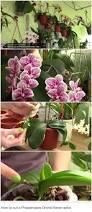 sweet viburnum 200mm pot viburnum 22 best susan u0027s garden inspo images on pinterest garden plants