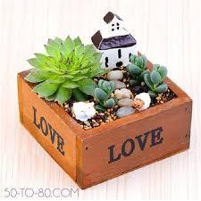my mini garden plot 1pc small wooden box succulent and plant