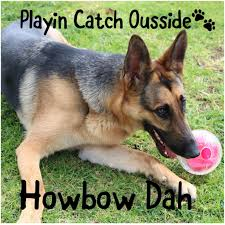 German Shepherd Memes - catch outside how bout that hahaha i just can t get enough of