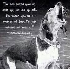 bluetick coonhound obedience bluetick coonhound dog grand bleu de gascogne hounds dogs