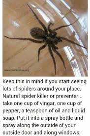 Bee Deterrent For Patio Make Your Own Spider Repellent Home And Lifestyle Pinterest