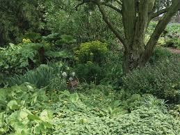 Plants For Patios In The Shade Shade Garden Ideas Hgtv