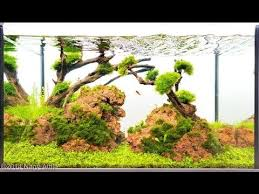 Most Beautiful Aquascapes 87 Best Aquarium Images On Pinterest Aquarium Aquascaping And