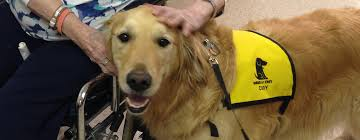 therapy dog training class registration now open