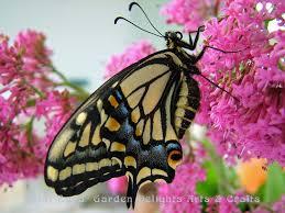 butterflies garden delights arts crafts