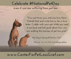 grieving loss of pet national pet day write a letter to heal your pet loss