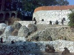 rock garden photos and image gallery holidayiq