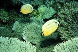 pesci alimentazione foto gratis farfalla pesci alimentazione subacqueo
