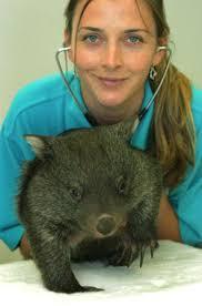 kelly o sullivan the pet directory australia wildlife world s largest online pet