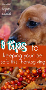 how to keep your pet safe during thanksgiving blessed beyond a doubt