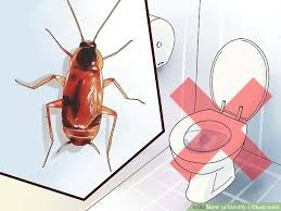 roaches in my bathroom 4 ways to identify a cockroach wikihow