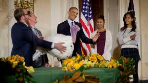 obama spares turkeys in white house thanksgiving tradition