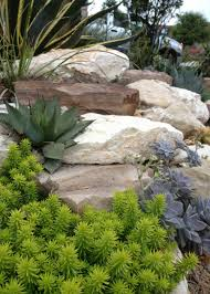 xeriscape 4 u2026 redesigned front yard u0026 zoyzia lawn rhinamic workforce