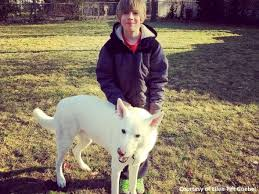 bichon frise nashville this boy u0027s sweet reunion with his best dog friend will bring you