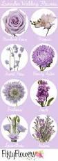 purple flowering australian native plants best 25 purple flowers ideas on pinterest purple lilac purple
