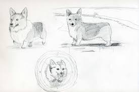 sketches for corgi sketches www sketchesxo com