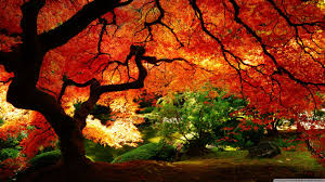 beautiful autumn hd desktop wallpaper for u2022 dual monitor