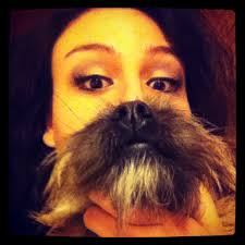 Cat Beard Meme - proud dog owners show off their funny dog beards