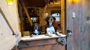 glamping pets archives mutts